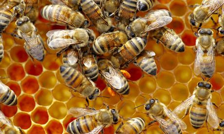 Impact of pesticide on bees and beehive