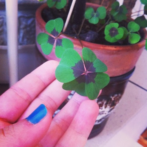 #yonca #kleeblatt #glück #luck