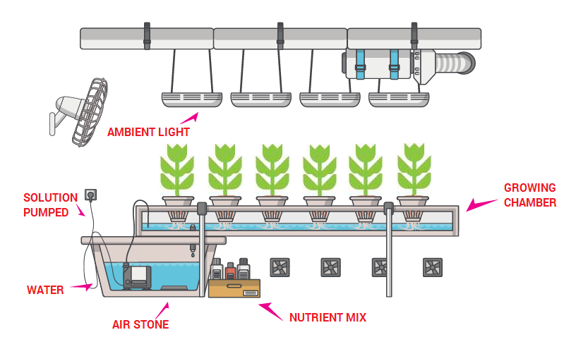 Hydroponic farms automation solutions Singapore ...