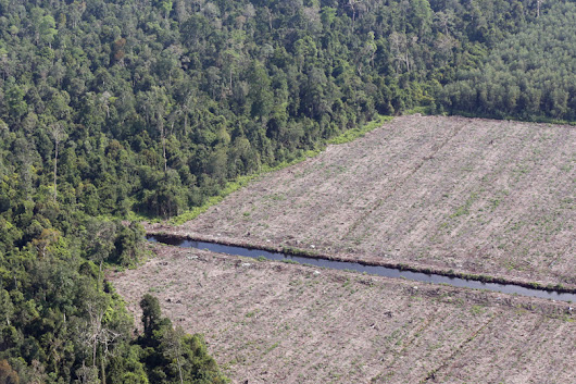 Five years after zero-deforestation vow, little sign of progress from Indonesian pulp giant