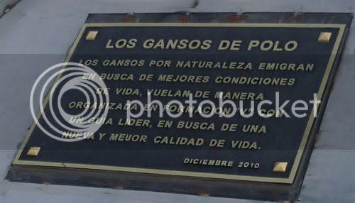 Los Gansos de Polo II