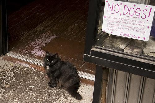 Cat, East Village