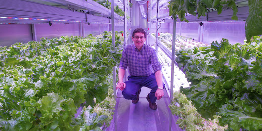 Growing Food With Hydroponics Could Provide Lifeline In Arctic