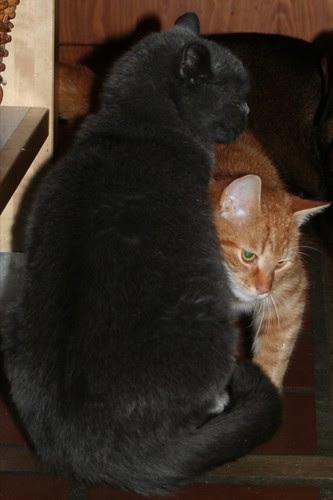 Karel en Bruno