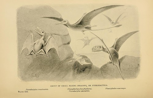 Group of Small Flying Dragons, or Pterodactyls