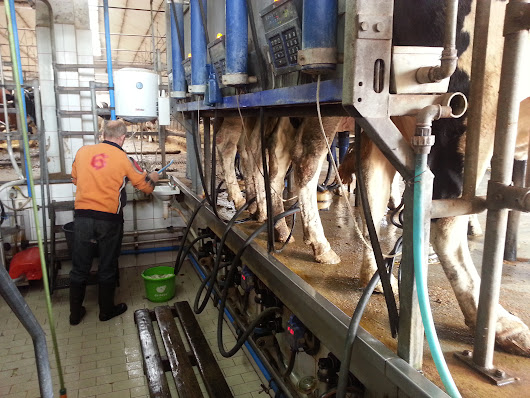 How to improve milking performace 2 (The milking routine)