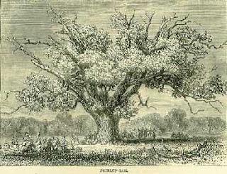 artist's impression of the ancient Fairlop Oak