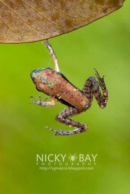 Frog - DSC_6085