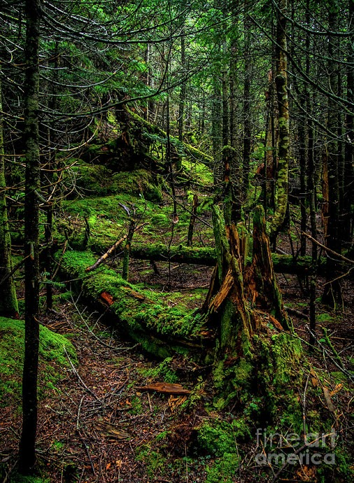 In the Deep Woods - photograph by +James Aiken  The allure and beauty of the Vermont wilderness in areas...