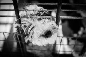 Ohio Hopes To Set National Standard For Puppy Mill Regulations