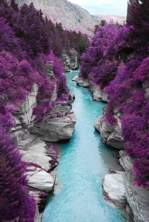 water blue purple view nature travel forest turquoise river lilac fields
