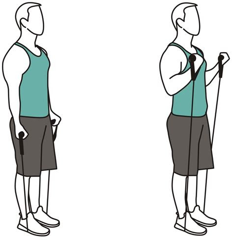 resistance bands exercises  beginners atemi sports