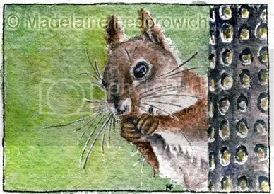 Afternoon Snack Squirrel ACEO