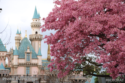 Disneyland Photo Update – Walls Come Crumbling Down