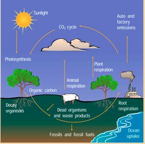 Webquest/ Biogeochemical Cycles - A.P.E.S