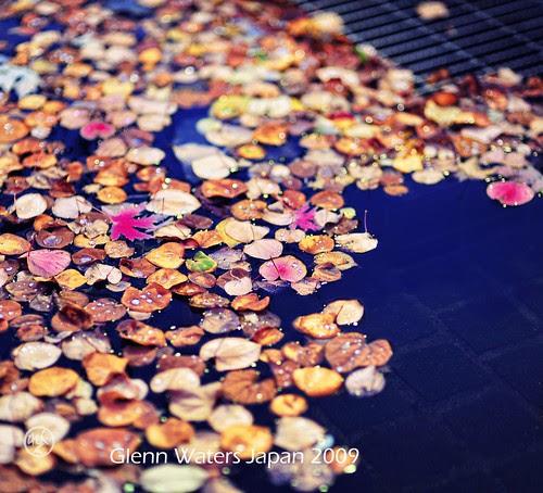 Floating Leaves por Glenn Waters ぐれんin Japan.