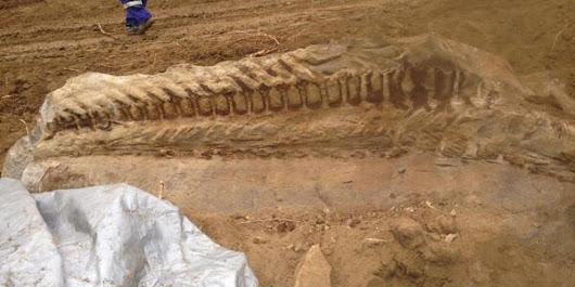 Massive Dinosaur Fossil Unearthed By Alberta Pipeline Crew (PHOTO)