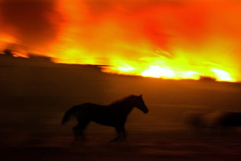 Image result for horses in forest fires in california