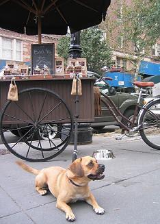 Dog Town Bites Cart with Doggie in West Village
