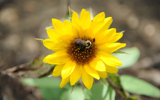 Celebrating the first day of spring with news of a pollinator garden on campus