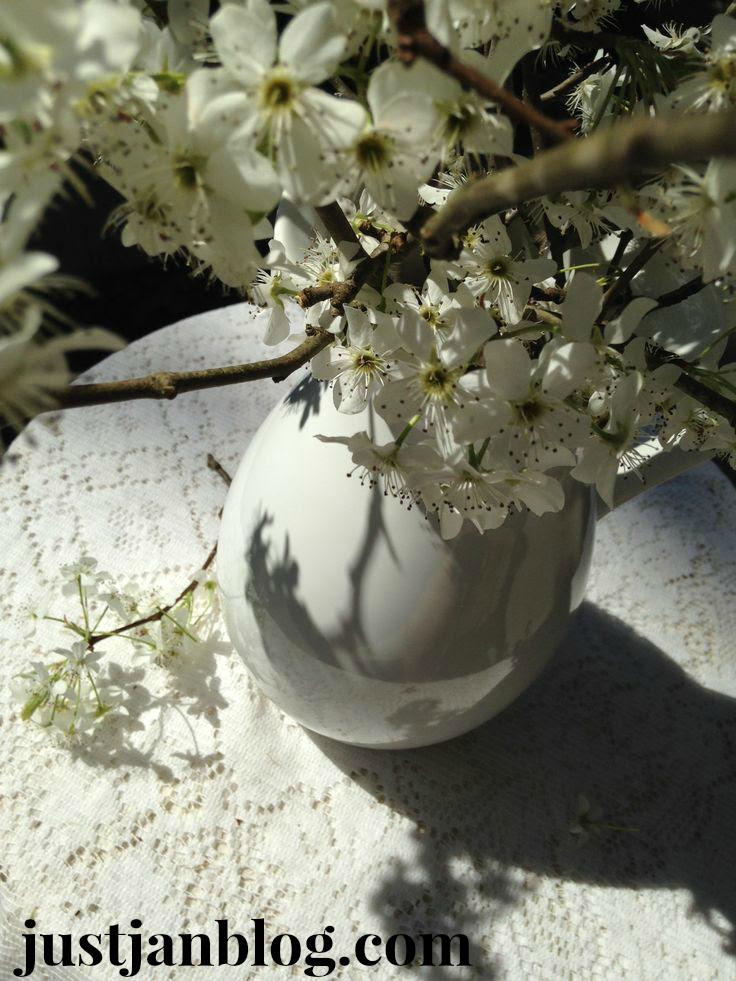 white bradford pear flowers5