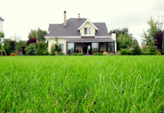 Types of Grass - Finding the Best Variety for Your Lawn - Bob Vila