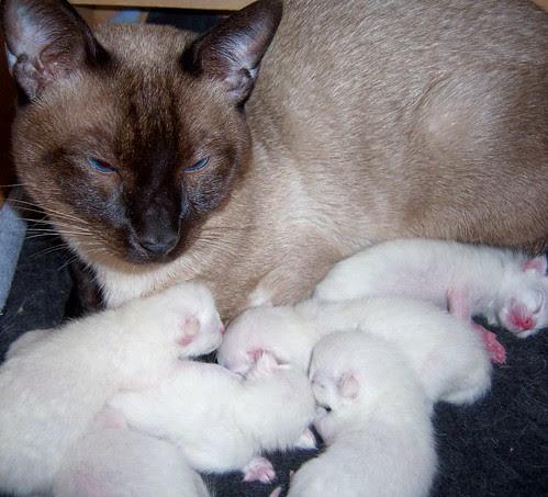 1 papa and babies