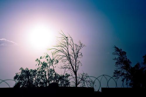 61.365_soft_purple_sunset