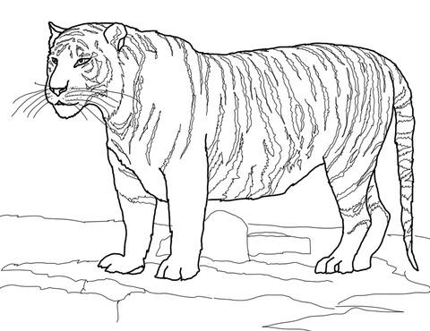La Scelta Migliore Disegno Da Colorare Tigre Le Migliori