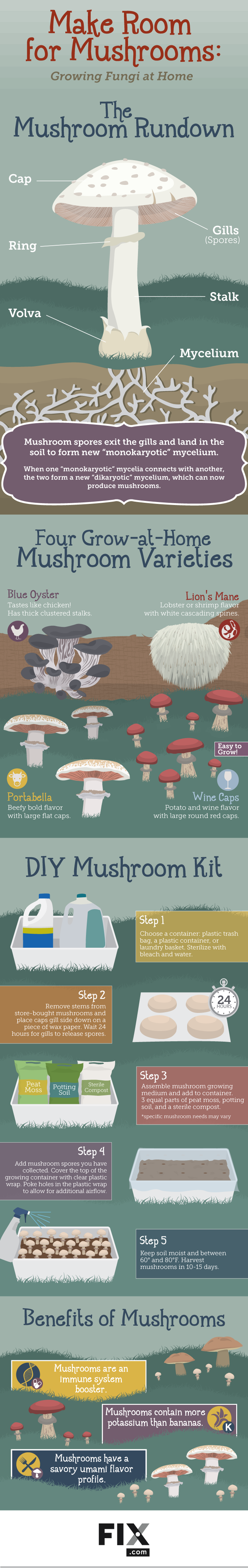 Make Room for Mushrooms Growing Fungi at Home