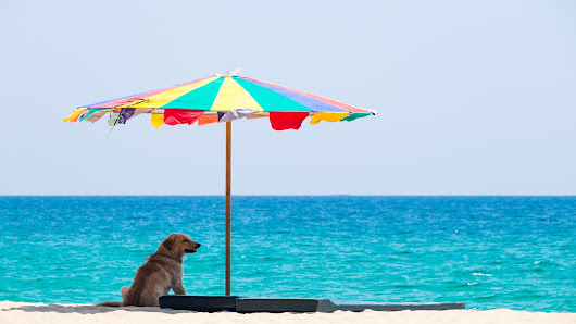 Planning your Pup-Safe Beach Vacation