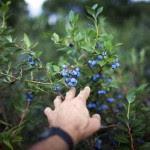 blueberries-fruit-benefits_71315_600x450