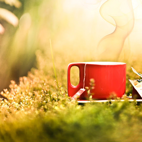 Cuba Gallery: Photoshop / tea / smoke / color / red / nature / light / green / photography