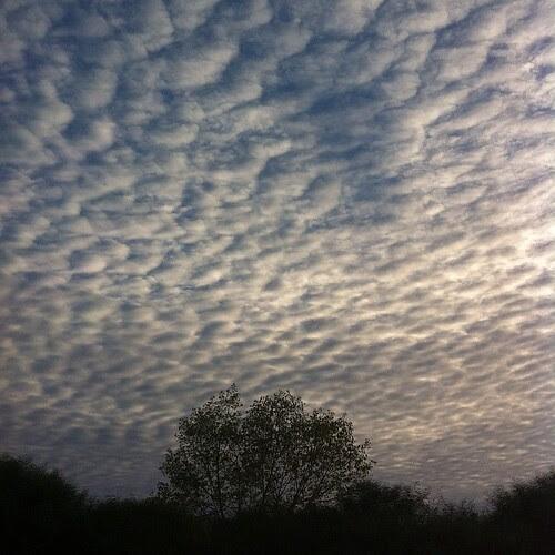 #Cotton #blue #sky by Joaquim Lopes
