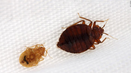 Bed bugs getting hard to kill, study says