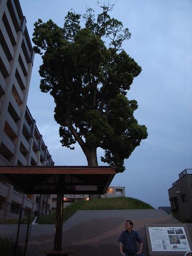 Tree, man
