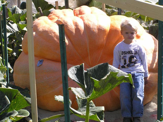 http://kimchiicecream.files.wordpress.com/2009/10/world_largest_pumpkin1.jpg
