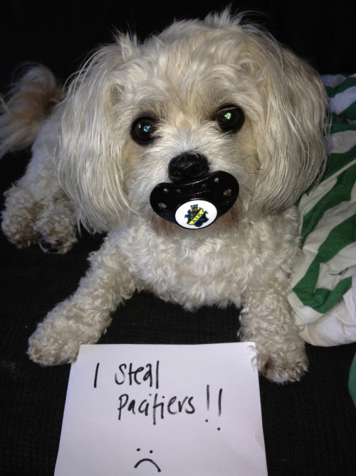I steal pacifiers from babies and children!!!