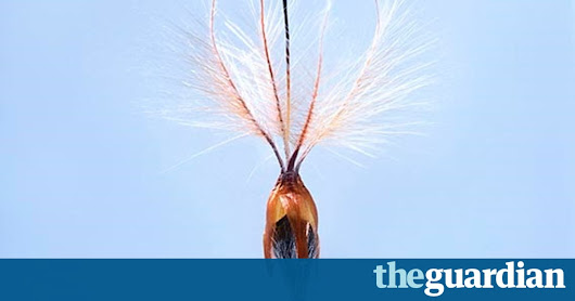 Seeds: little time capsules that could secure our future | Life and style | The Guardian