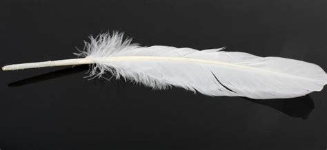 White Natural Loose Goose Quill Feathers   Feathers & Boas