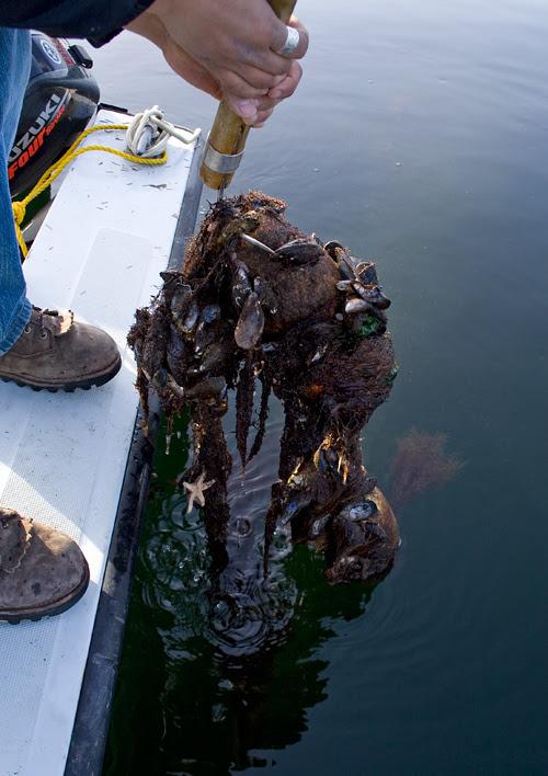 neglected buoy, Kina Cove, Kasaan Bay, Alaska