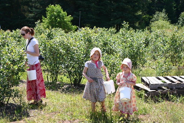 berry picking - picture taken by Kevin