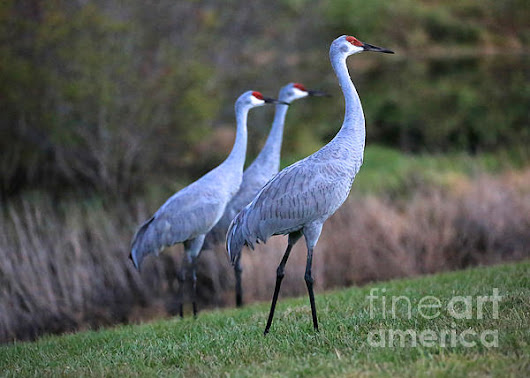 Three Sandhills On The Hill by Carol Groenen