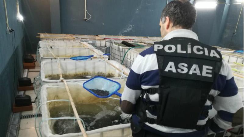 """Resultado de imagem para ASAE apreende 600 quilos de """"jovens enguias"""" que valem mais de um milhão de euros"""