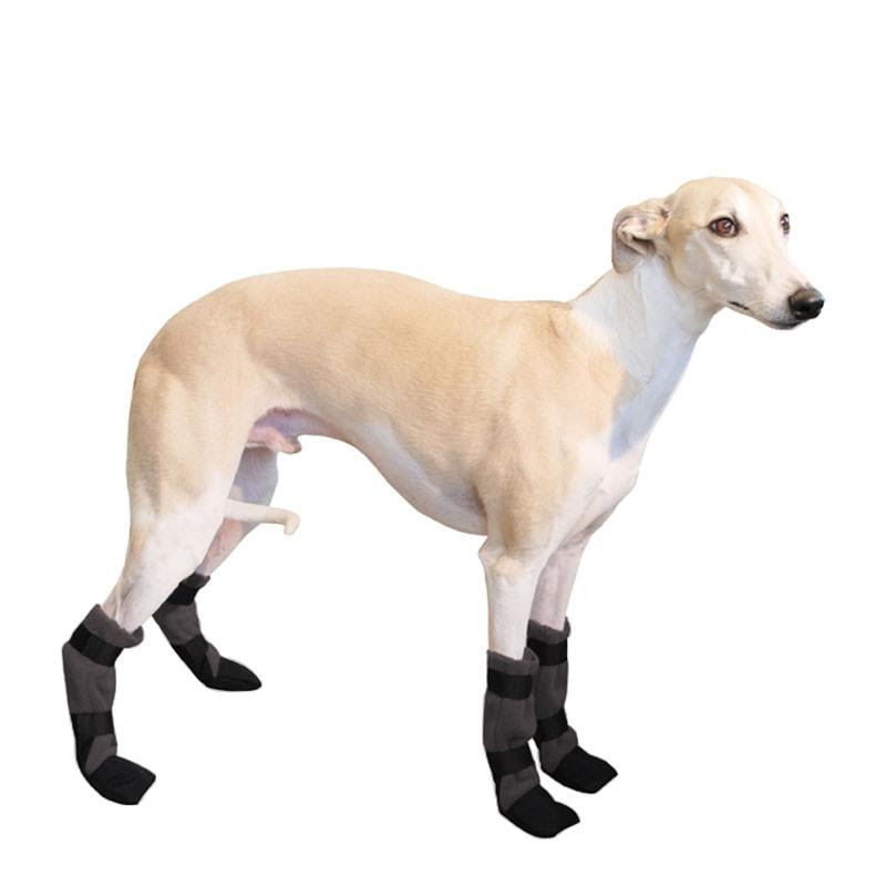 Whippet Puppies Breeders For Sale Near Me In Utah