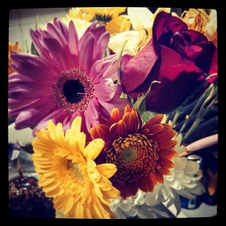 Surprise #fall #flowers #GerberDaisy #rose #love