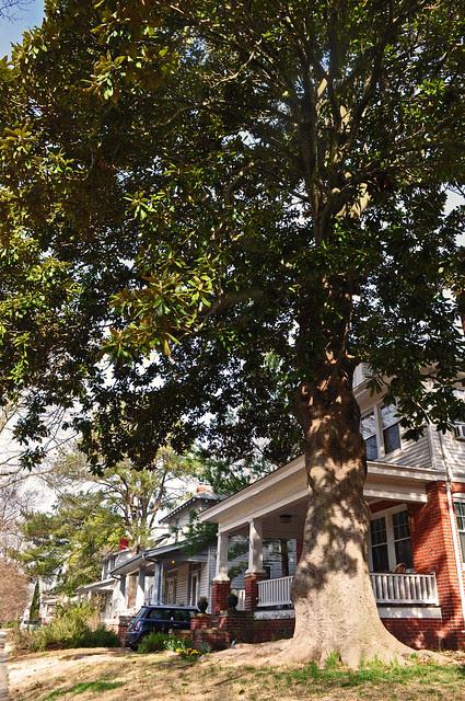 Magnolia on New Jersey