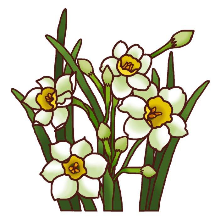 スイセン水仙カラー冬の花2花のイラスト季節の花お花と季節のお礼状