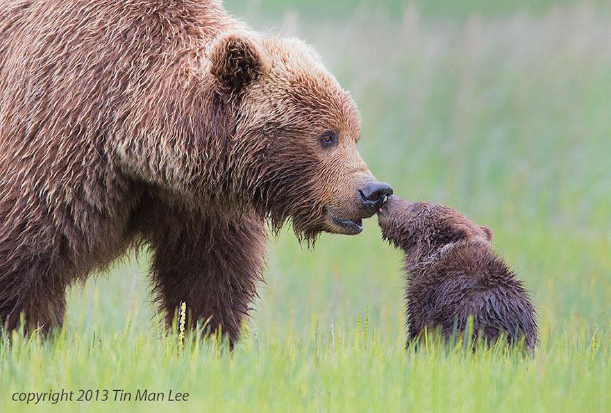 http://www.boredpanda.com/cute-animal-parenting/?image_id=animal-parents-40.jpg