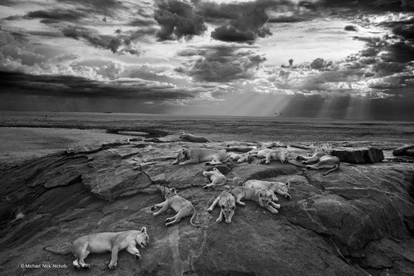 Natural History Museum Wildlife Photographer of the Year 2014